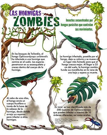 Las hormigas zombies_rpo.jpg