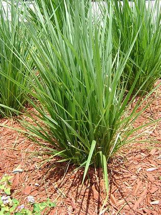 Fakahatche Grass Regular 3 Gallon
