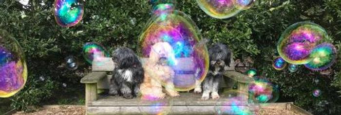 Doggie Bubbles – Peanut Butter Scented