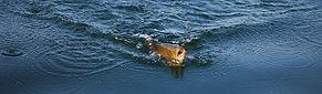 Fishing-1600x468.jpg