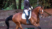 Dressuur #Paardensport