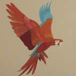 Maccaw Parrot Mural