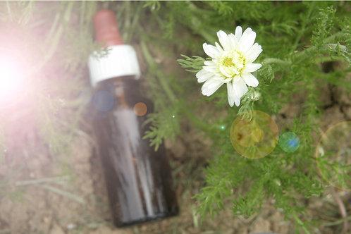 Conseils en élixirs floraux