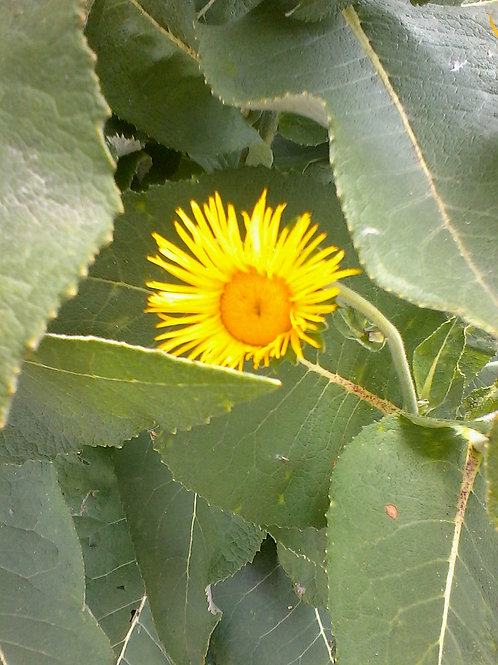 Conseils express en élixirs floraux