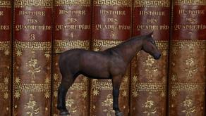 Cosa ci fa un cavallo in una libreria? (2)