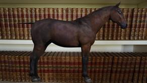 Cosa ci fa un cavallo in una libreria?
