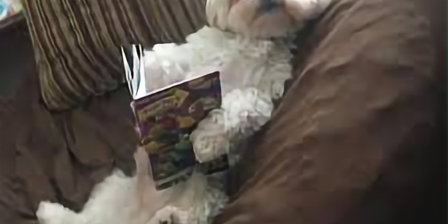 """Photo contest: Adults take a photo of your pet """"reading"""" a book"""