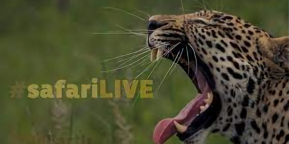 "Virtual Safari ""live"""