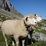 Alpsommer_ca.jpg