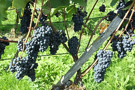 pinot-noir-3278502_1920.jpg