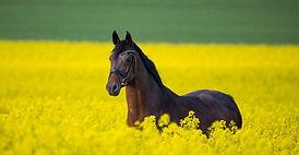 horse-3888661_edited.jpg