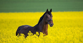 horse-3888661_edited_edited.jpg