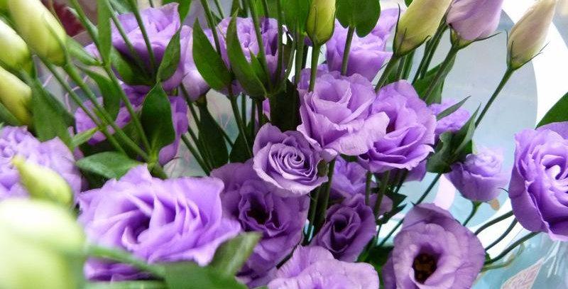 Эустома(Лизиантус) махровая Lilac (заказ от 5шт)