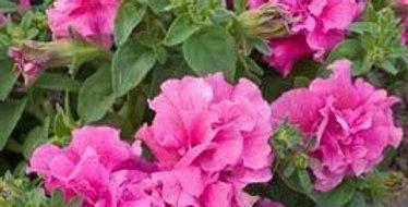 Петуния махровая Double Cascade Pink (цена за опт)
