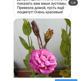 Screenshot_20190110-191333.png