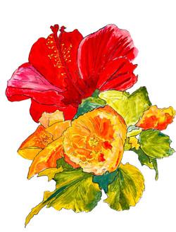 hibiscus collor correction