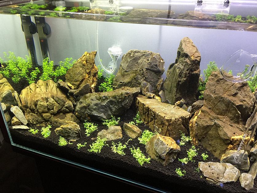 dyfuzor CO2 do akwarium roślinnego