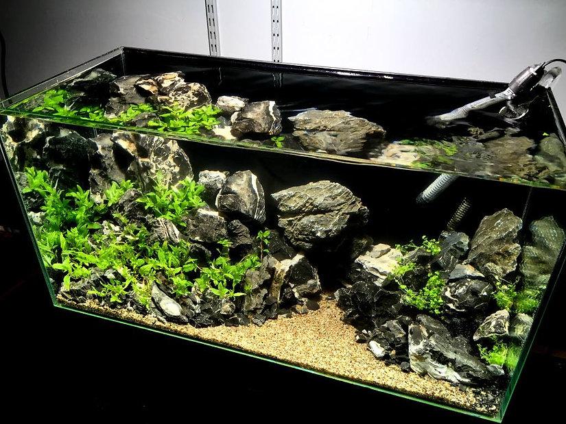 podłoża do akwarium roślinnego