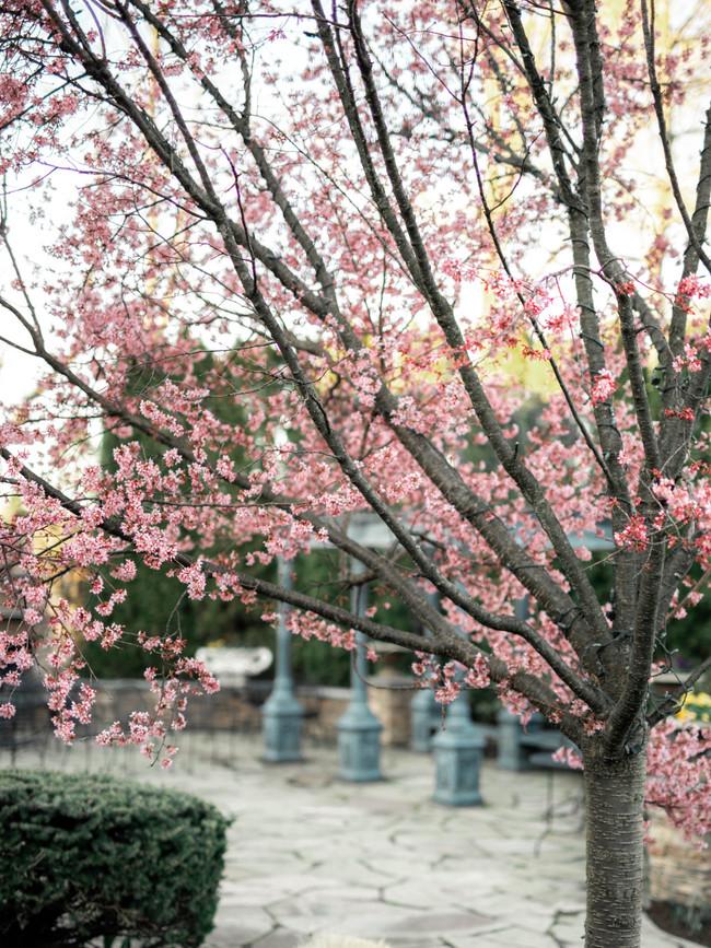 new-jersey-wedding-cherry-blossom.jpg