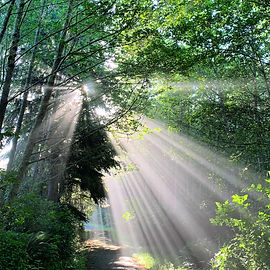 Sunbeams through trees