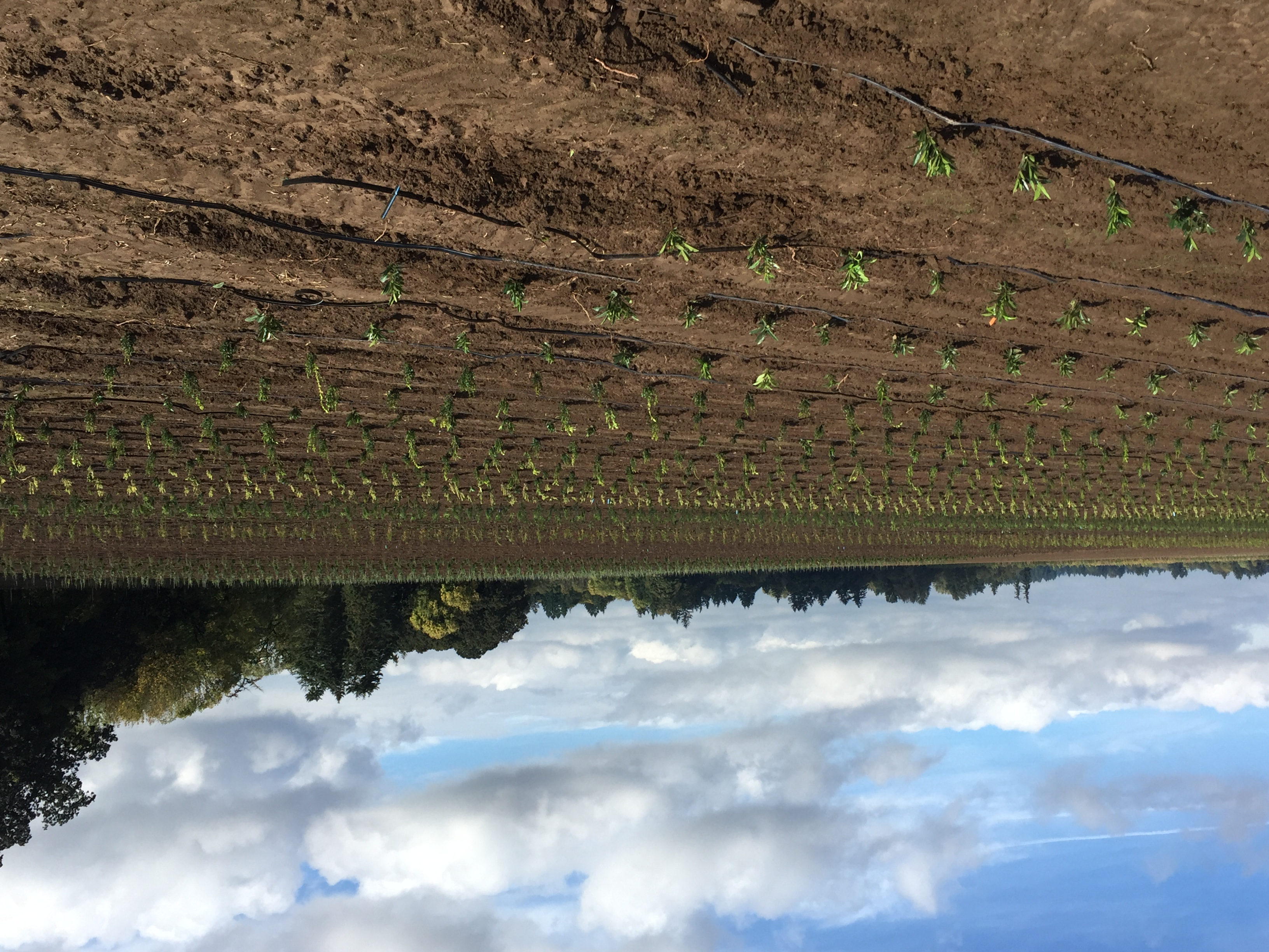 2016 Planting