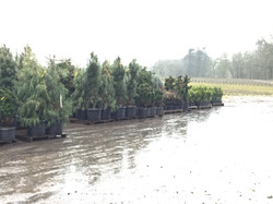 Plants ready to be shipped