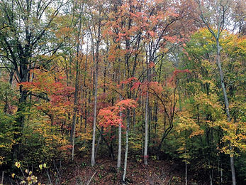 Selling timber in WV, how to sell my timber, sell my timber, timber appraisals in WV, sell my timber, forest management in WV, forestry consulting, forestry consulting services in WV, forestry consulting services, standing timber buyers in wv