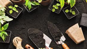 ¿Es la terapia de plantas algo real?