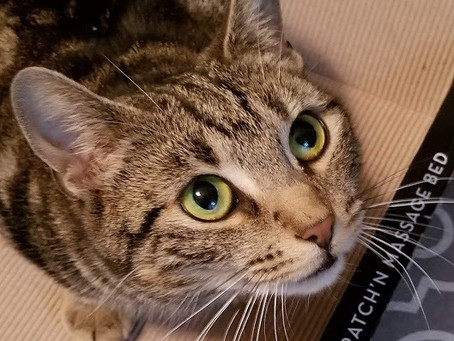 LOVELY LUNA *ADOPTED* Richmond Hill 9 #9!!!