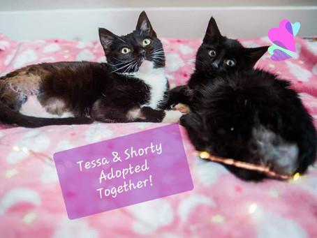 HandiCats Tessa & Shorty Adopted 😻