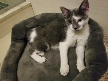 Tonka Adopted!!