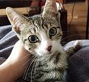 Kissa Kitten