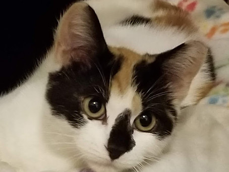 Mazzie Moo & Marlowe Boo Adopted!!
