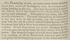 Report of the second death of Jacob Cox's Horse