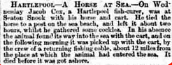 Report of the first death of Jacob Cox's Horse