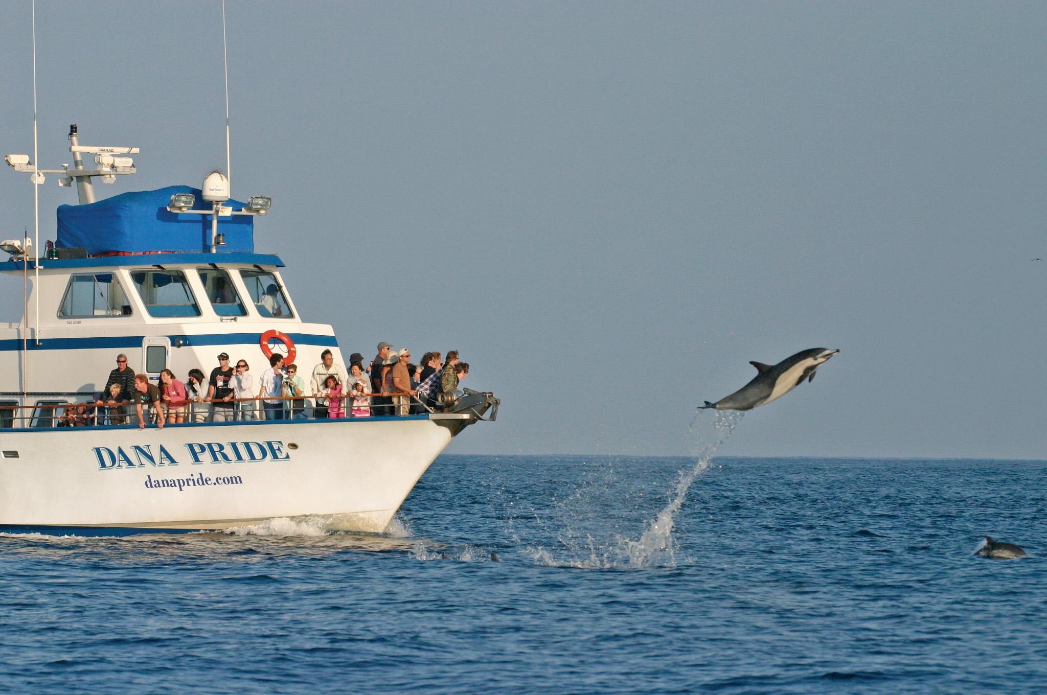 GALLERY-Dana-Wharf-Sportfishing-Whale-Wa