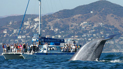 manutea-and-blue-whale_copyright-barry-c