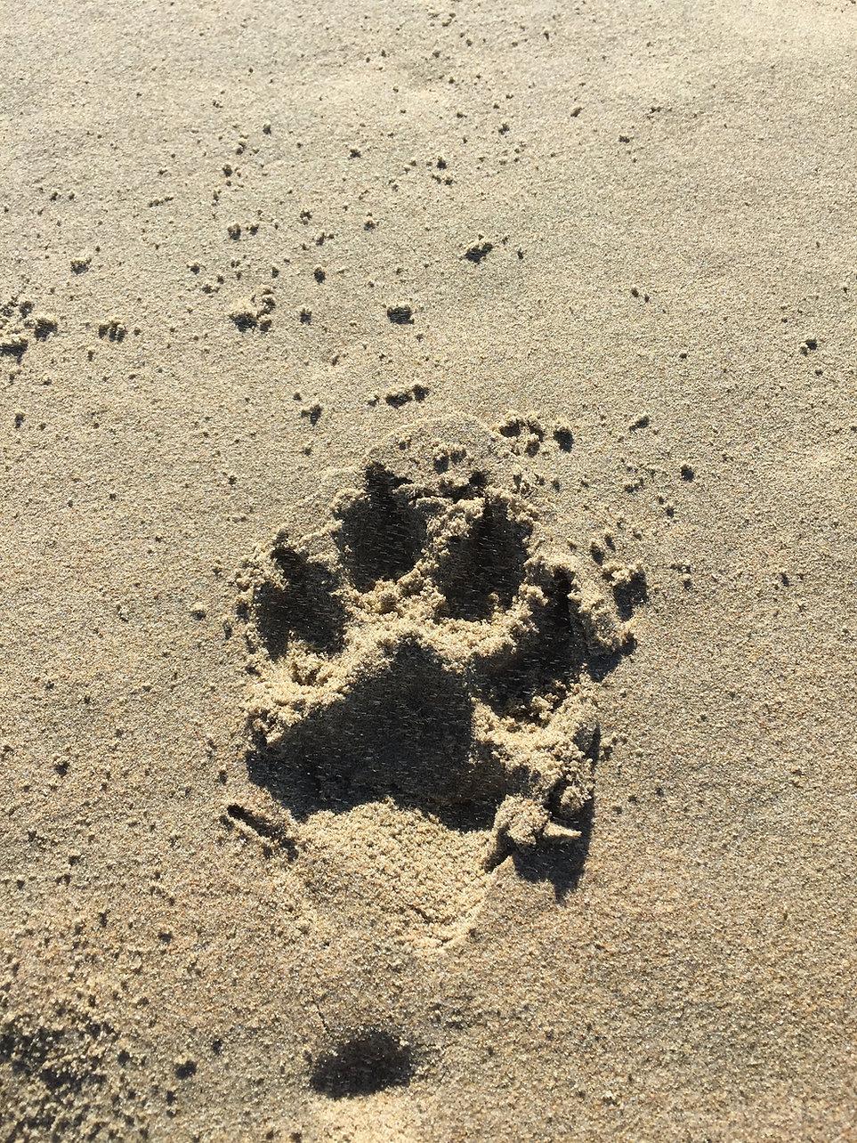 Mojo @ Waipatiki Beach