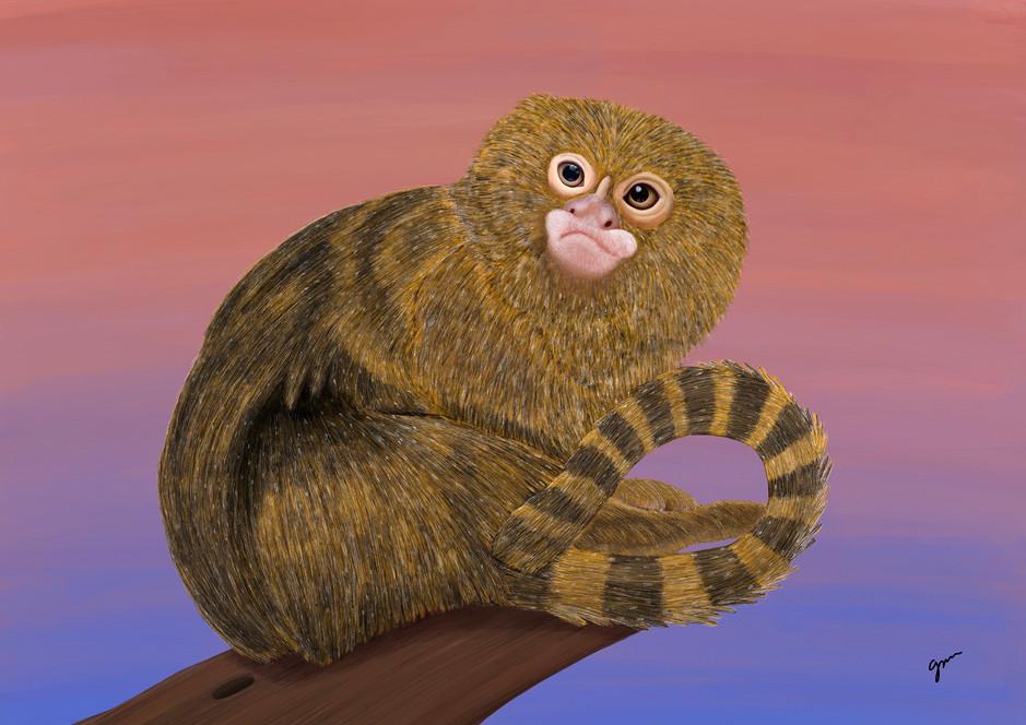 Pygmy Marmoset (original image by Edwin Butter)