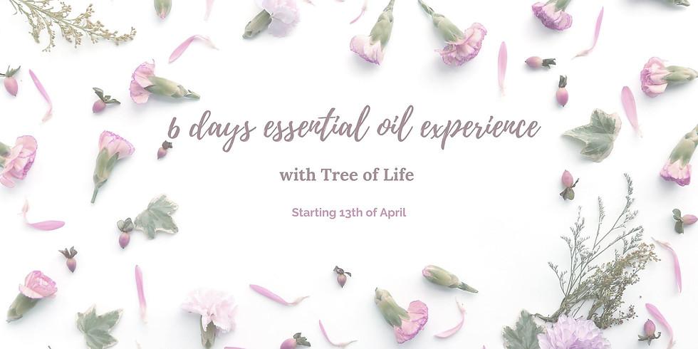 6 Days Oil Education