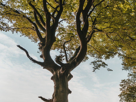 Dealing With Loss – 5 Ways in Which Trees Help Us Grieve