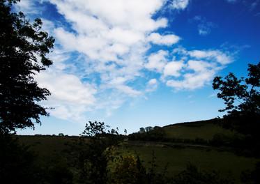 Clouds through the tree.jpg