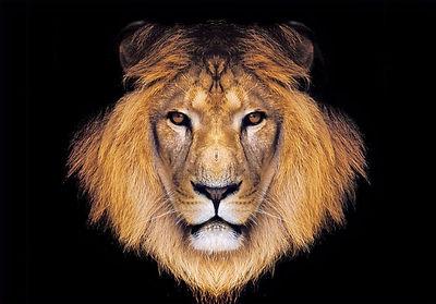 LionofJudah_edited.jpg