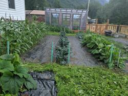 Klukwan community garden in growing stro