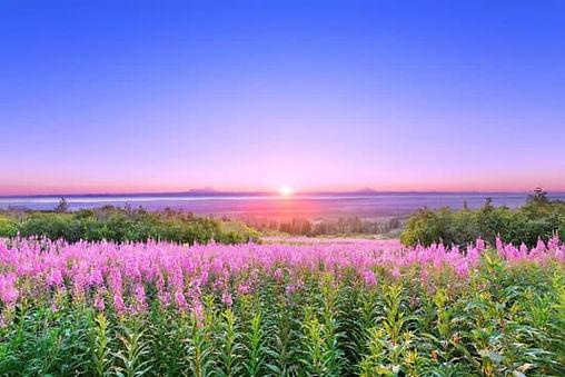 canva-scenic-view-of-alaskan-fireweed-fi