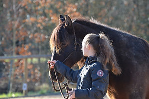 Débourrage jeunes chevaux. Travail et entrainement du cheval. Education du poulain. Toulouse, Montauban, midi-pyrénées. Stage ethologie. Méthode douce.