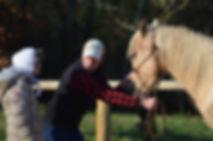 Stage ethologie. Comprendre et eduquer son cheval à la légéreté. Timing et feeling pour obtenir un cheval connecté et en harmonie avec le cavalier
