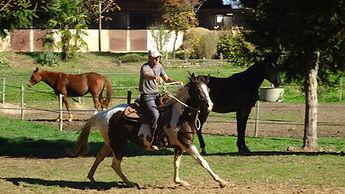 Rééducation des chevaux difficiles. Chevaux à problèmes. Tire au renard, bouscule le cavalier ou ne se laisse pas attraper au pré