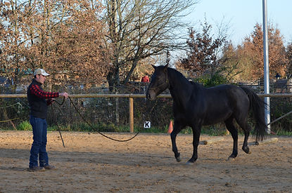 Ethologie, cheval Tarn et Garonne Midi-Pyrénées.