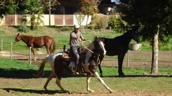 Rééducation des chevaux difficiles